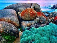 Australia New Zeland