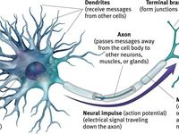 17 Best Images About Motor Neuron Disease Treatment On