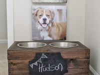 For The Home: PUPPY EDITION