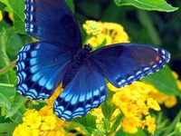 Beautiful butterflies and fascinating insects