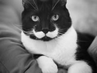 Kitty...kitty...kitty......