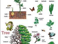 tree essay in english