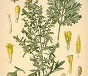 aroma herb stuff