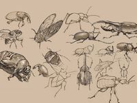Drawings that are concentrating on volume and depth.