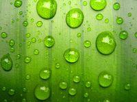 Free Videos Of Green Leaf Nudes 18