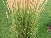 Gone Gardening - with Grasses
