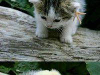 Cutesy Amimals<3