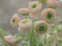 Garden flowers, design