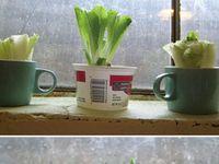 GROW FRUIT & VEG