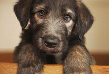 Sweet, Cute & Adorable Pet