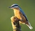 Birds / by Peter Flohr