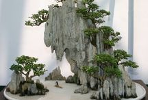 paisajismo y bonsai