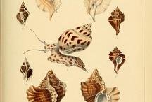 Illustration Unterwasserwelt