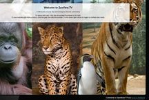 Watch TV: ZooView Webcams / Can't make it to the Milwaukee County Zoo? No worries -- you can still watch your favorite animals via ZooView.tv (http://www.zooview.tv/). You can see jaguars, elephants, brown bear/Dall sheep, Lake Wisconsin, African lions/hyenas, Amur tigers, Humboldt penguins, gentoo and rockhopper penguins, and orangutans.