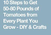 Grow / TOMATO 10 steps