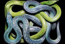 Yılanlar