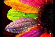 Taste the rainbow / by Ashlee Frydrych