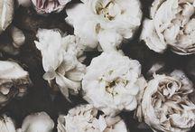 Blomsters / Växter meet konst