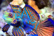 ryby akwariowe słonowodne