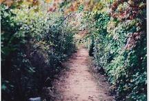 Flores, Plantas, Huertas y Jardines / Flowers, plants, orchards and gardens
