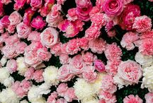 Flower Walls / by B Floral