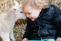 Ovce, jehňata