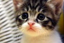 I want a kitty cat!