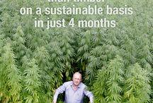 cannabis.hemp.kenaf