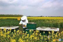 imker / bijen