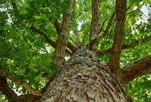 Stromy - Trees / Stromy - Trees