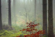 Erdők fotón
