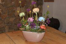 Coloured Echeveria Amigo DECO / Coloured Echeveria for the most beautiful floral creations!