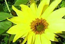 цветы, растения, природа / То, что выращено своими руками
