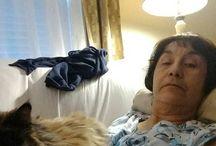 Instagram https://www.instagram.com/p/BSJGi7-DxoD/ March 27, 2017 at 08:51AM #cat #recovery My convalescing buddy