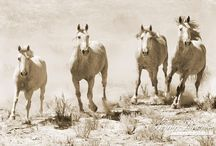 Horses in Sepia / Some like it in Sepia