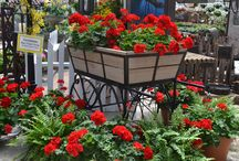 Memorial Week Sale (5/18 - 5/25/15) / There are 4 sizes of French Gardens starting at $9.99. We have beautiful geraniums with a large selection of sizes & colors, this week buy 3 and get 1 FREE (while supplies last) Or perhaps a large patio planter or hanging baskets for your patio for this Memorial Day weekend Special Added to Sale!  Buy Buy 2 hanging baskets of equal value at regular price and get your 3rd FREE!
