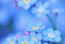 detaily květin
