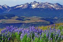Wildflowers in Pagosa Springs, CO