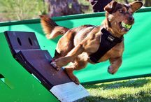 DogSport Magazine Multi Sports! / Multi Sports! - Dog Agility, Obedience, Rally, Disc Dog, Flyball and more!