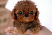 I want 1