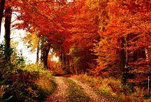 Fall in Earth