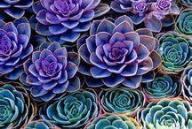 Garden Ideas / by D .