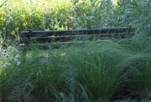 Don't Forget the Grasses / Grasses are the backbone to any prairie...they add structure and beauty.