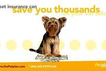 Petplan Insurance Promo Code / For Petplan Insurance Promo Code visit at - https://www.facebook.com/PetPlanPromoCode