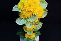黄 YELLOW / 黄色系