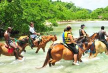 Now you can explore the plantation on horseback @ http://goo.gl/1OE6y4