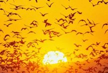 soleil levant soleil couchant
