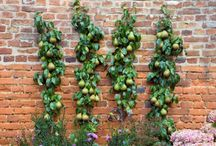 Training Fruit Trees / Espalier, Step-over and other training ideas and tips!