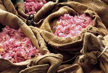 Rose Petal (Gül yaprakları)