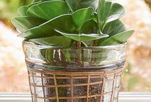 Planten in potten